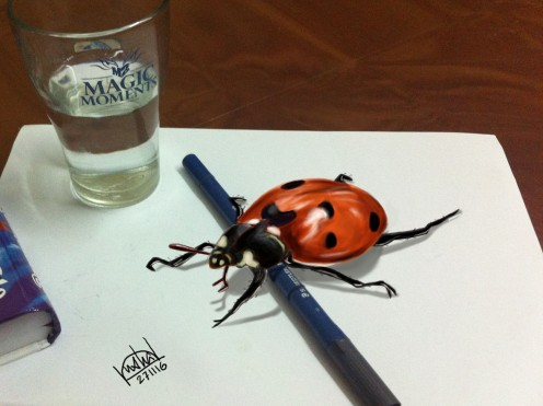 beetle-beauty-copy