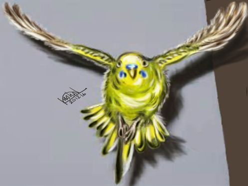 bird-of-paradise-copy